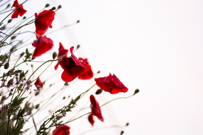 Remembrances (Remembrance Day)